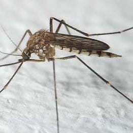 West Nile virus caused two human deaths in Pennsylvania this year, 33 cases statewide