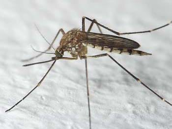 Mosquitoes are the deadliest animal on the planet. They carry many diseases, including West Nile and Zika virus and dengue fever.