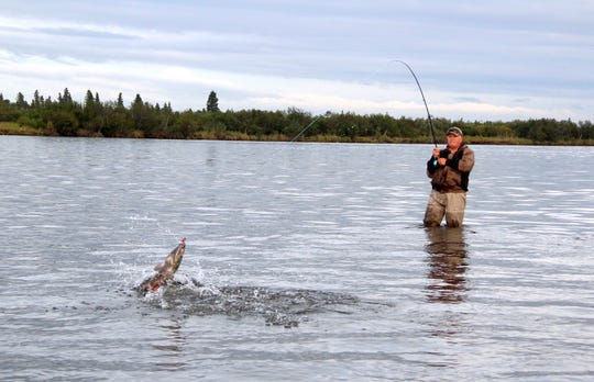 Dave Zeug fights a chum salmon while fishing on the Alagnak River near King Salmon, Alaska.