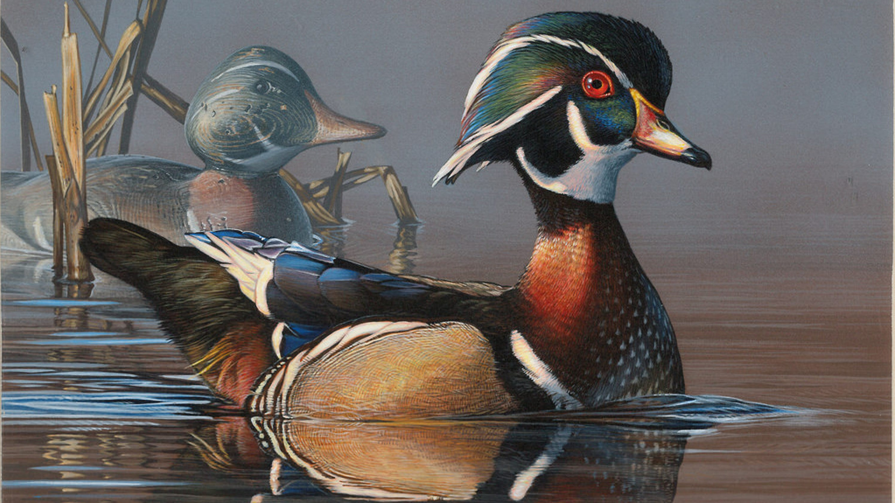 Wisconsin Artists Place Second And Third In 2018 Federal Duck Stamp Design Contest