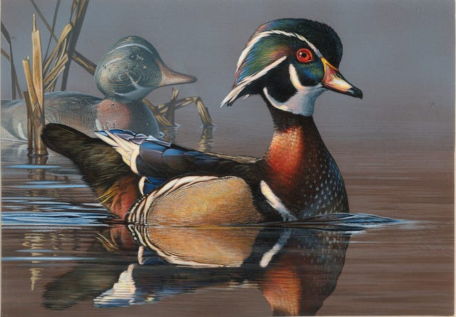 Scot Storm of  Freeport, Minnesota, won the 2018 Federal Duck Stamp design contest with this acrylic painting of a drake wood duck and decoy.