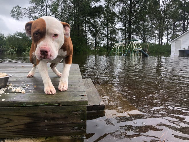A dog was stranded on a porch, unable to navigate the flood waters.
