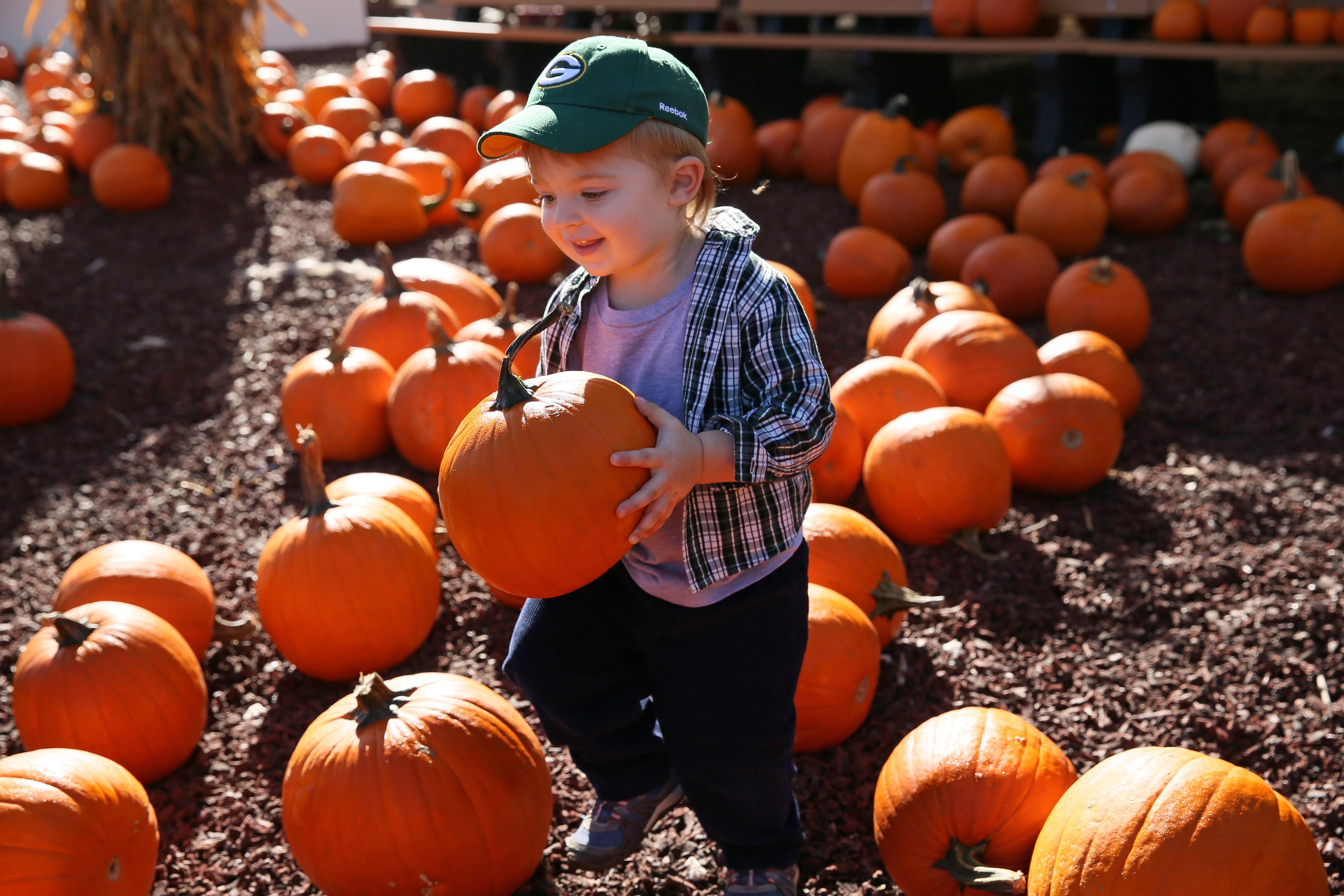 Pumpkins, pumpkins everywhere at Harvest Fair at Wisconsin State Fair Park.