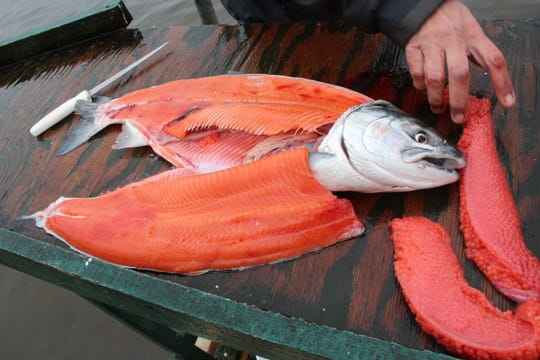 A silver salmon, also known as coho, is filleted after a fishing outing on the Alagnak River in the Bristol Bay region of southwestern Alaska.
