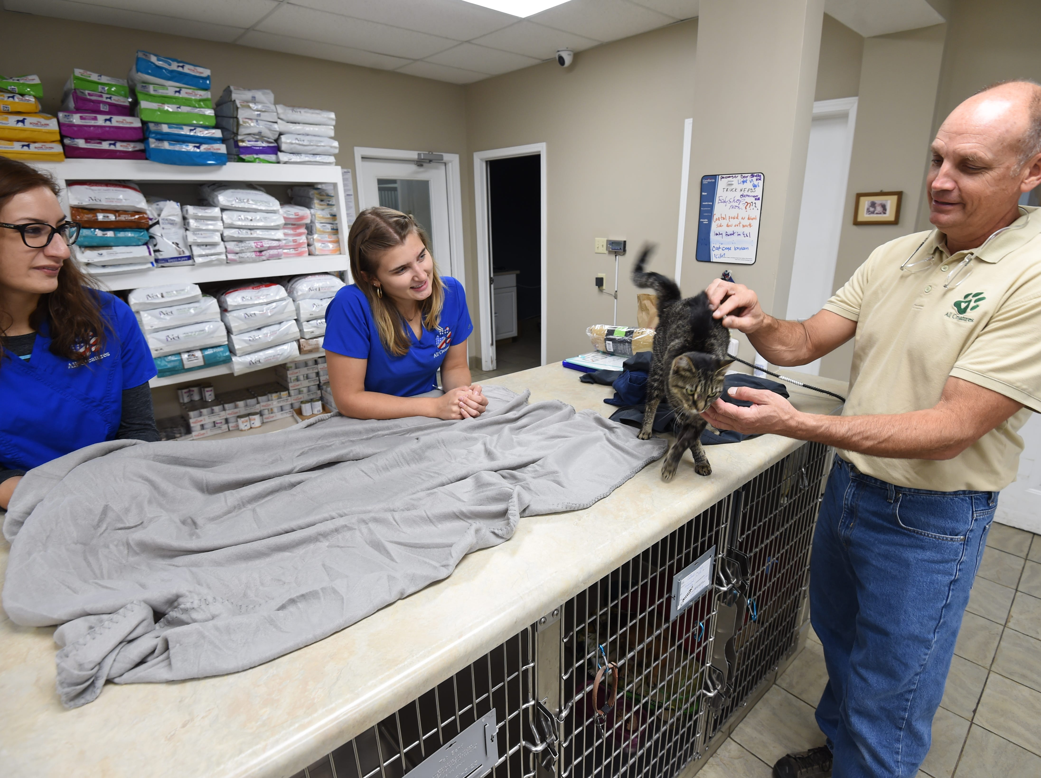 Dr. Rob Conner of All Creatures Veterinary Hospital along with clinic employees Stephanie Saunders, left, and Andrea Diedrichs check out Katniss, the cat who survived being shot in the head with an arrow.