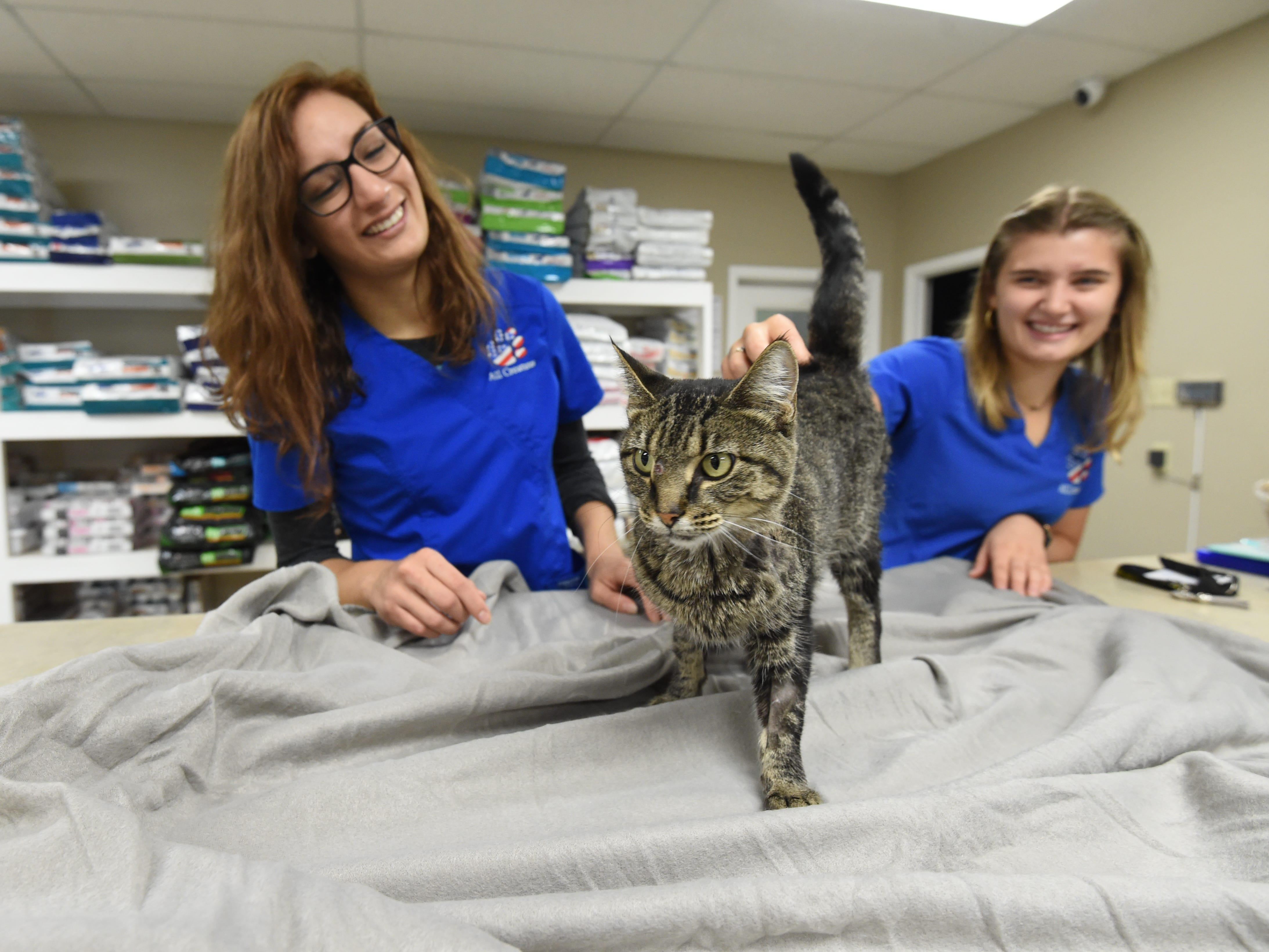 All Creatures Veterinary Hospital  employees Stephanie Saunders, left, and Andrea Diedrichs check out Katniss, the cat who survived being shot in the head with an arrow.