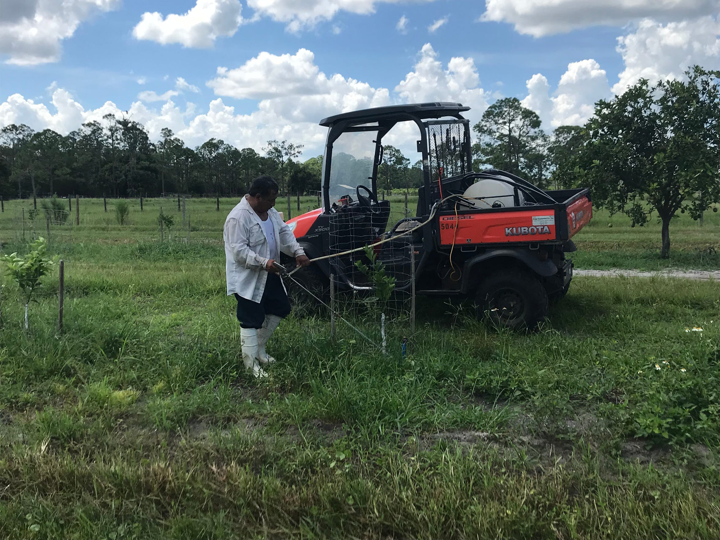 Jose Rodriguez waters new Valencia trees at Bear Hammock Grove off Immokalee Road in eastern Collier County on Sept. 17, 2018.