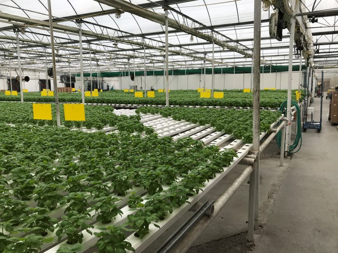 Hillview Med/Gro-Rite Garden Center & Florist in Pequannock applied for a license to grow and distribute medical marijuana.