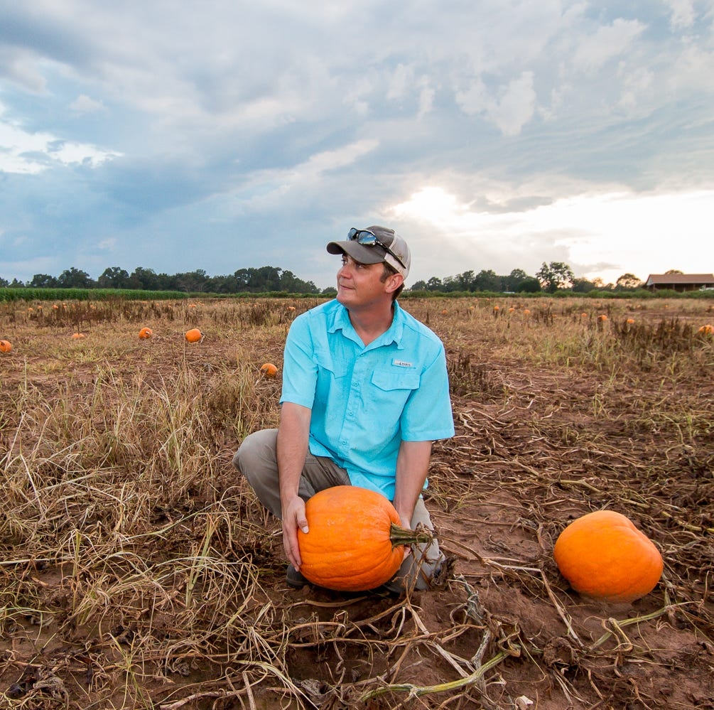 Holland Farms kicks off fall with pumpkin patch, mazes, more