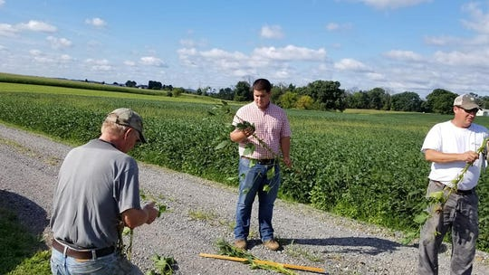 Glenn Zimmerman, Brian Kreider and Philip Stutsman inspecting crops during a Penn State Extension crop inspection tour Aug. 20, 2018. They are looking for signs of mold and disease that is affecting crops after the summer's heavy rainfall.