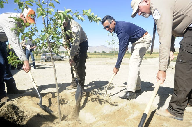 Gov. Brian Sandoval and state park officials plant a tree during the opening of Walker River State Recreation Area.