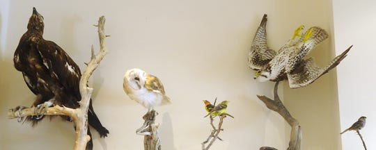 Mounted birds found at the recreation area are on display in the visitor center.