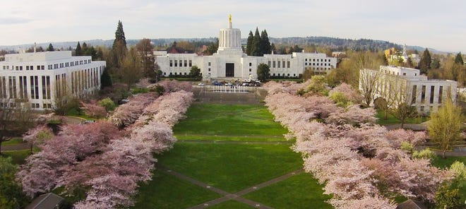 An aerial view of the Oregon State Capitol Mall with cherry trees in full bloom.