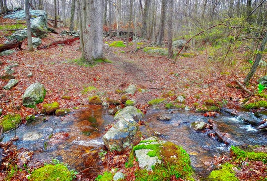 Catfish Loop in Fahnestock is a well blazed trail, with scenic woods throughout.