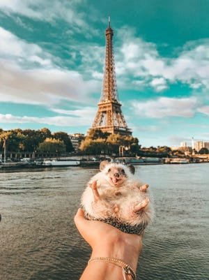 Mr. Pokee is a 3-year-old hedgehog that travels the world.