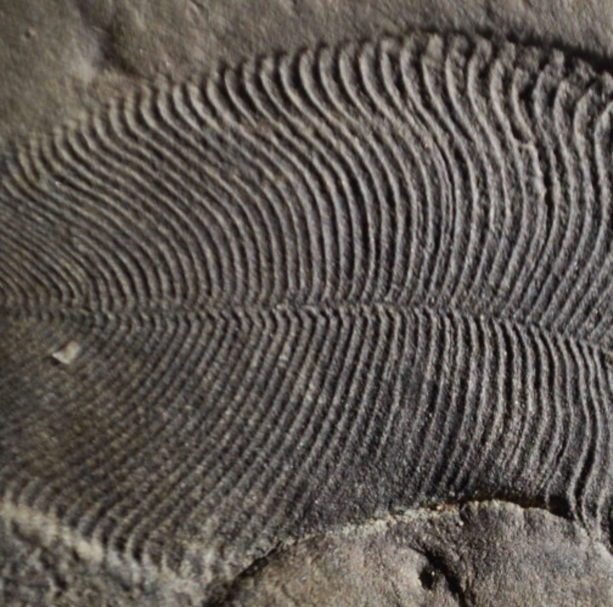 Strange ancient animal fossil is the oldest on record, scientists say