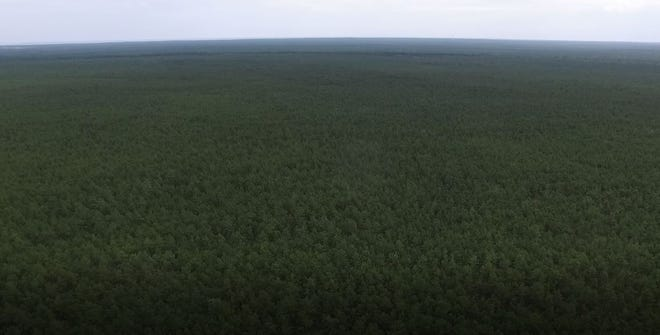 A view of the soon-to-be Forked River Mountains wilderness preserve in the Pine Barrens of Lacey and Waretown, as seen by a surveillance drone from the Ocean County Sheriff's Office.