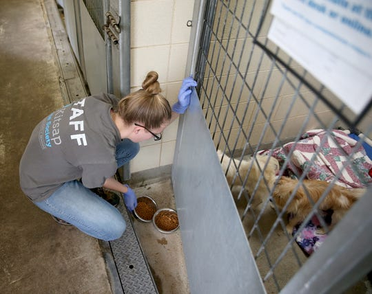 Audrey Anderson, an animal care technician at the Kitsap Humane Society, feeds some of the 26 dogs that had been seized from a squalid house in Chico. The society found new homes for all the animals taken into custody.