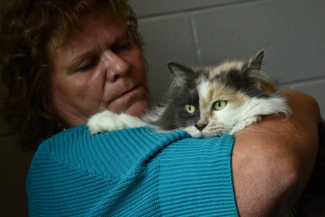 """Robin Ross Case, Dearborn Heights, cradles a three-year-old dilute calico cat named """"Suki,"""" which she adopted for her mom.""""We don't buy cats, we only save,"""" said Case who has rescued other cats."""