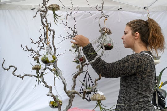 "Angelica Cole carefully chooses a hanging airplanter to buy from Garden Jewels vendor Jane Berrong, not pictured, during Funk in the City at Haynie's Corner in Evansville, Ind., Saturday, Sept. 22, 2018. ""I love cactuses and I kinda ran out of room to set them on the ground so I'll hang them from the air,"" Cole said while laughing."