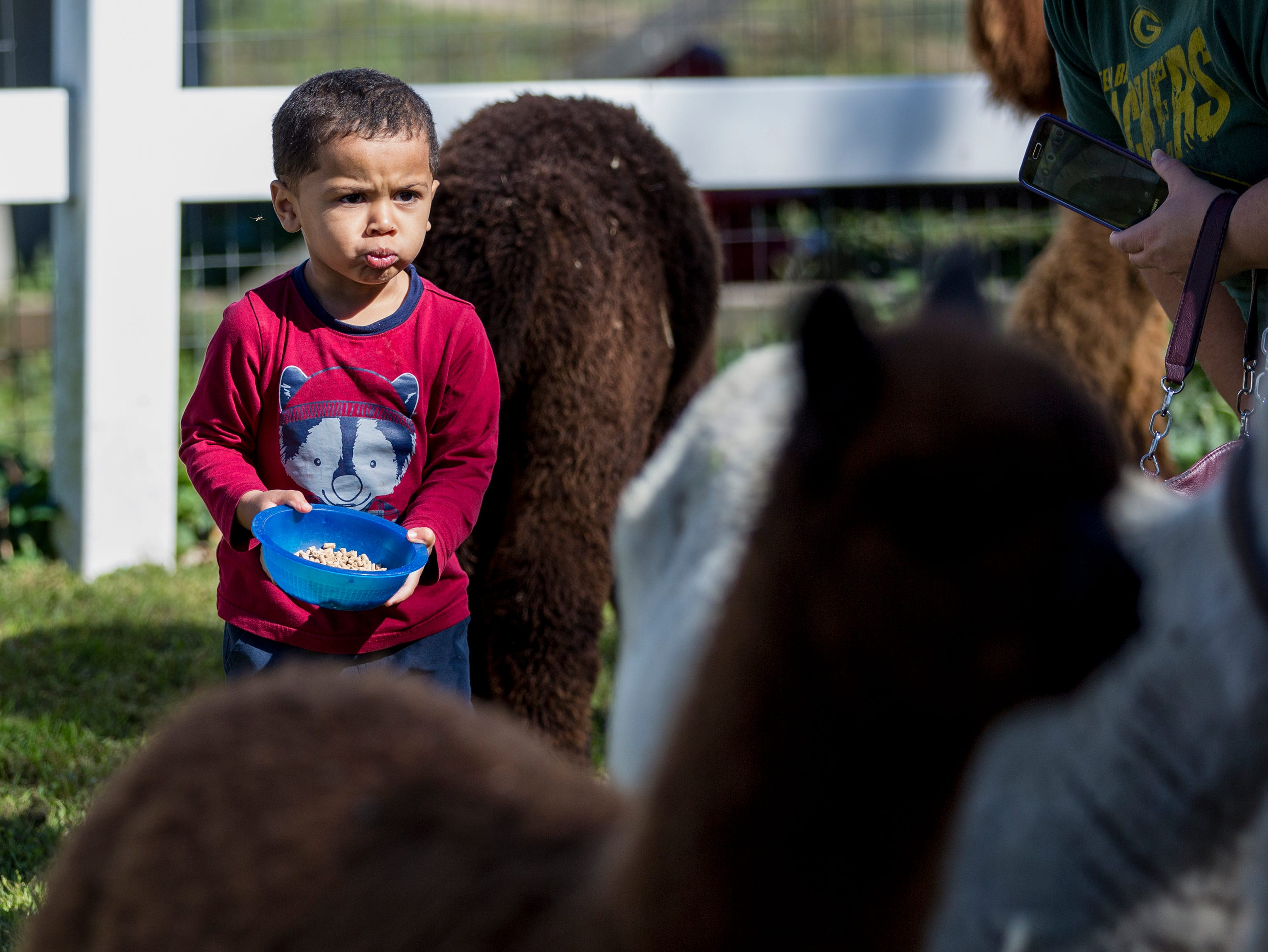 Milo Revees, 2, of Manitowoc, attempts to feed some alpacas during National Alpaca Days at LondonDairy Alpaca Ranch Saturday, September 22, 2018, in Two Rivers, Wis. Josh Clark/USA TODAY NETWORK-Wisconsin