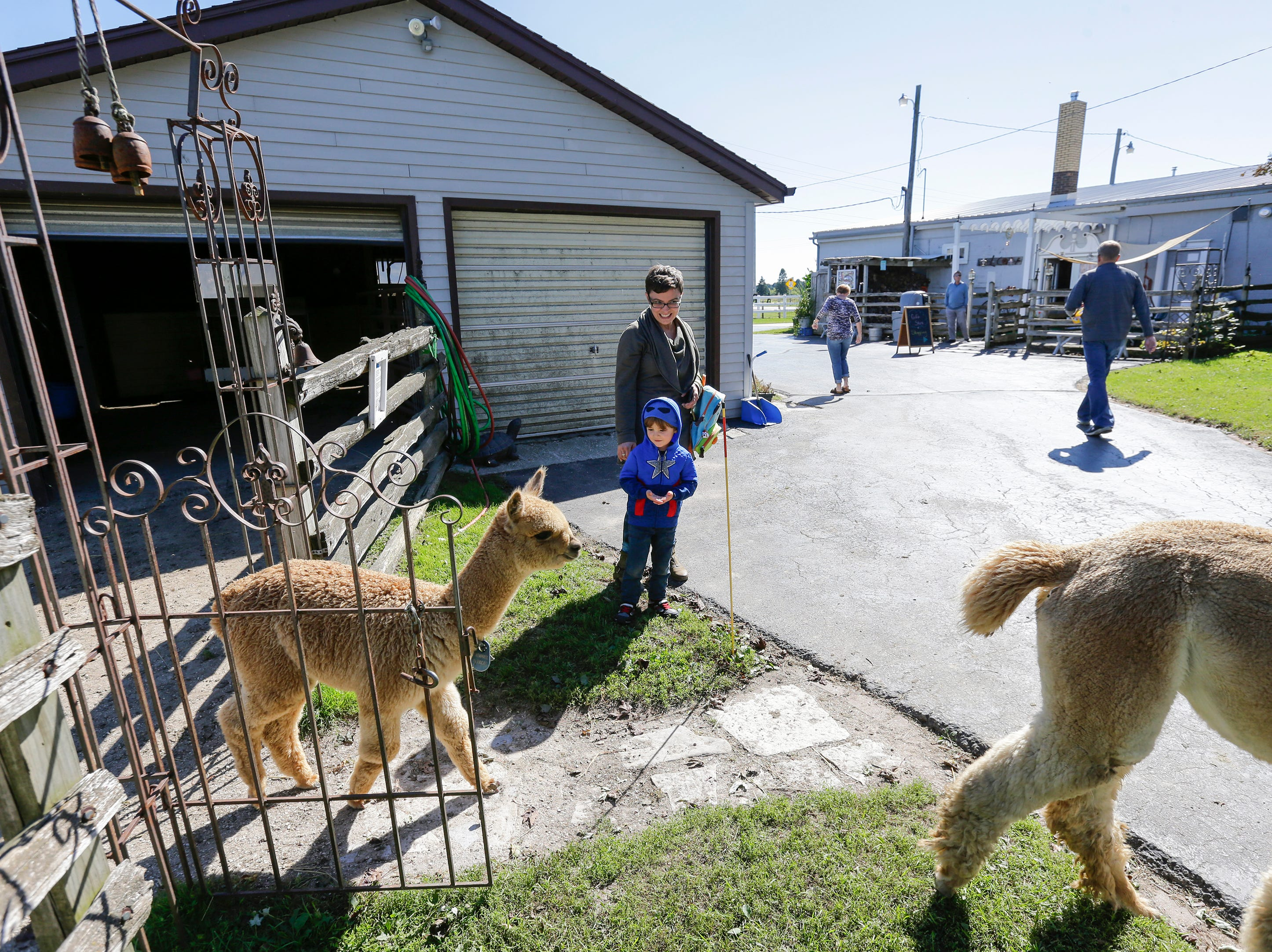 Everett, 3, and his mom Erica Haven, of Port Washington, watch alpacas roam LondonDairy Alpaca Ranch during National Alpaca Days Saturday, September 22, 2018, in Two Rivers, Wis. Josh Clark/USA TODAY NETWORK-Wisconsin