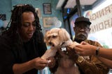 Kookie Morrison throws a birthday party for her dog Innocent, at Splish Splash Dog Daycare in Englewood on Friday September 21, 2018.