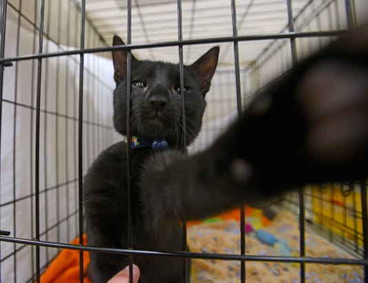 Fall In Love Pet Adoption 3