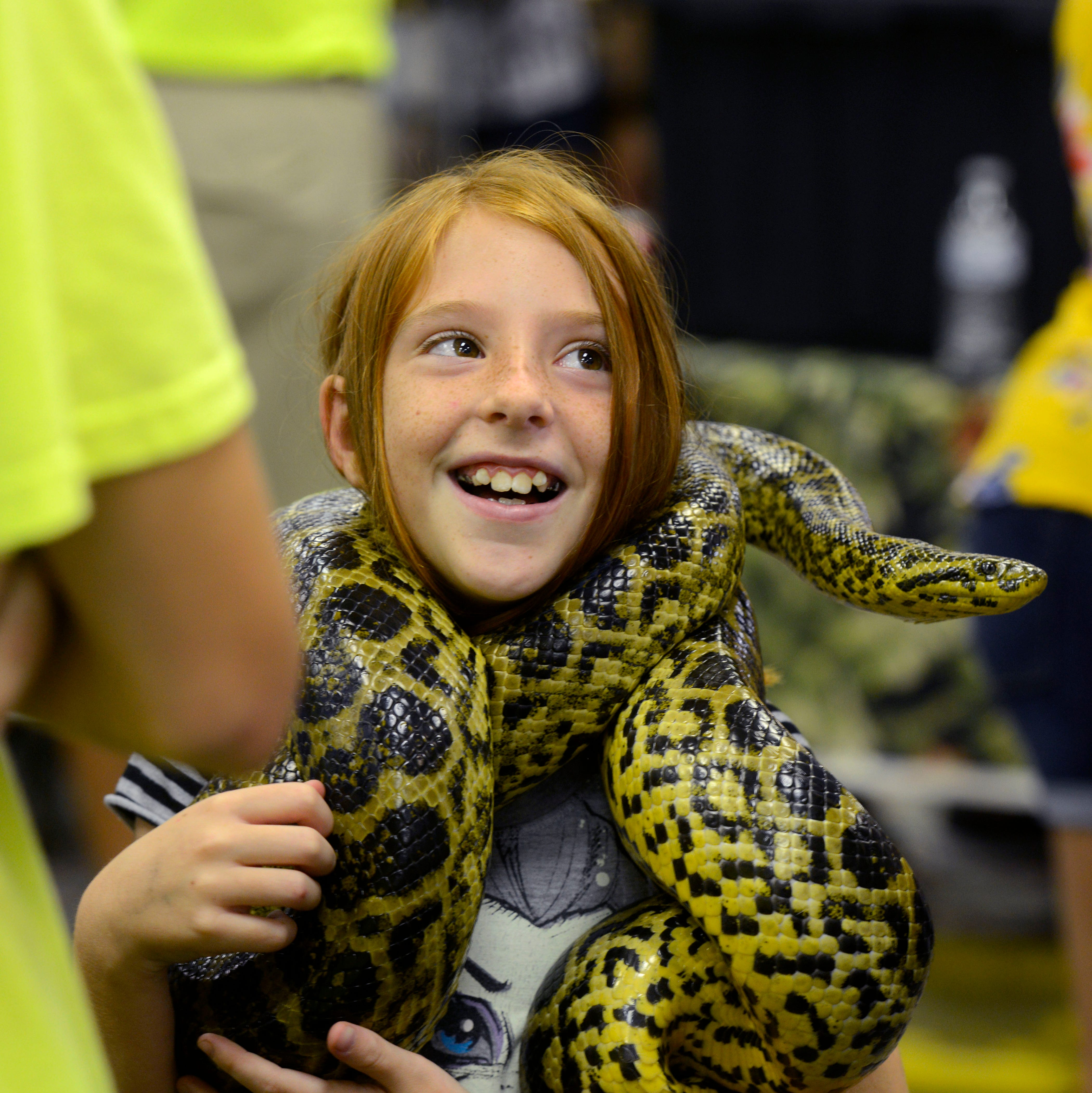 PHOTOS: ReptiDay in Navarre showcases the slithery side of nature