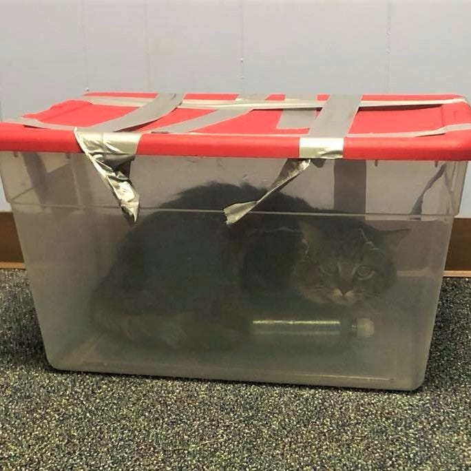 Police searching for person who left cat in plastic bin that was duct-taped shut