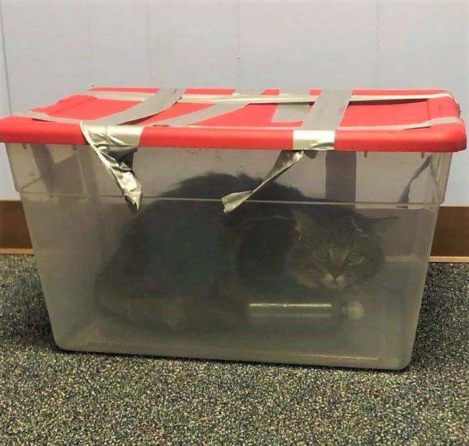 A cat was found trapped in a plastic bin with the lid duct-taped shut on Saturday. Le Roy Police are asking for the public's help in the investigation.