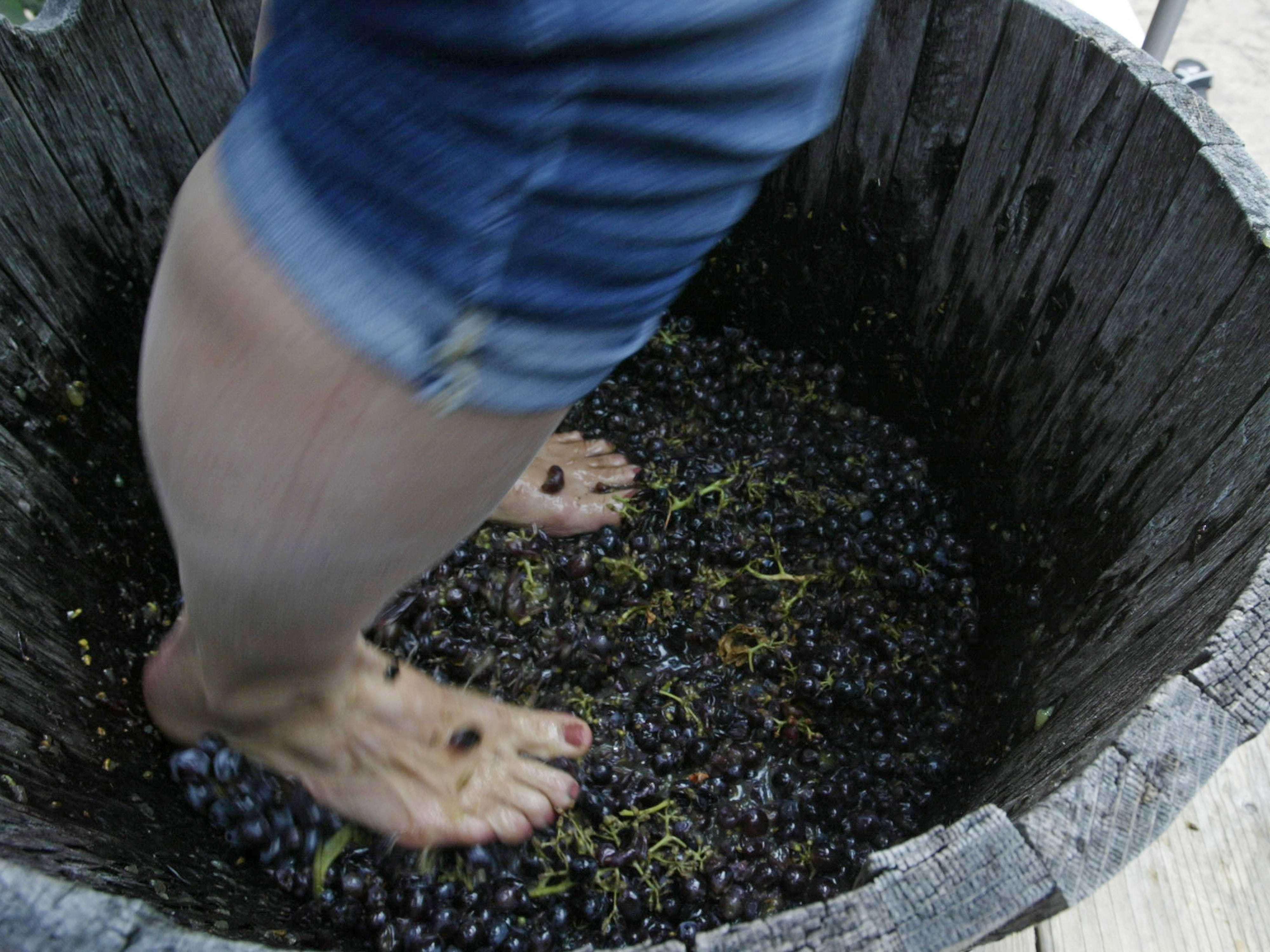 Feet at work during the grape stomp at the Harvest Festival & Grape Stomp at The Blind Horse Restaurant and Winery, Saturday, September 22, 2018, in Kohler, Wis.