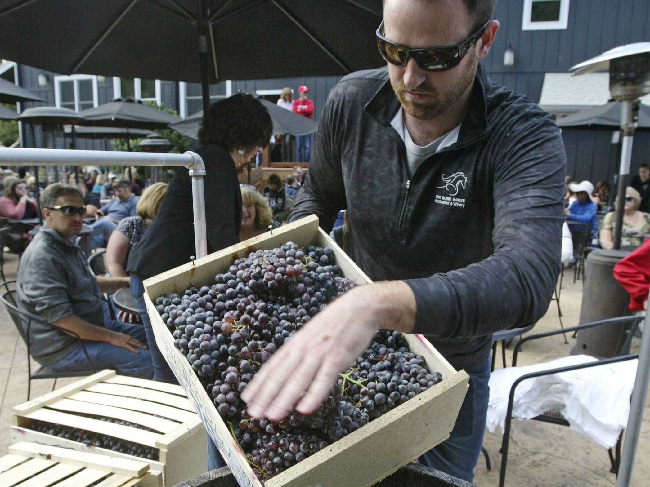 Assistant winemaker Patrick Regenwether loads grapes before the grape stomp at the Harvest Festival & Grape Stomp at The Blind Horse Restaurant and Winery, Saturday, September 22, 2018, in Kohler, Wis.