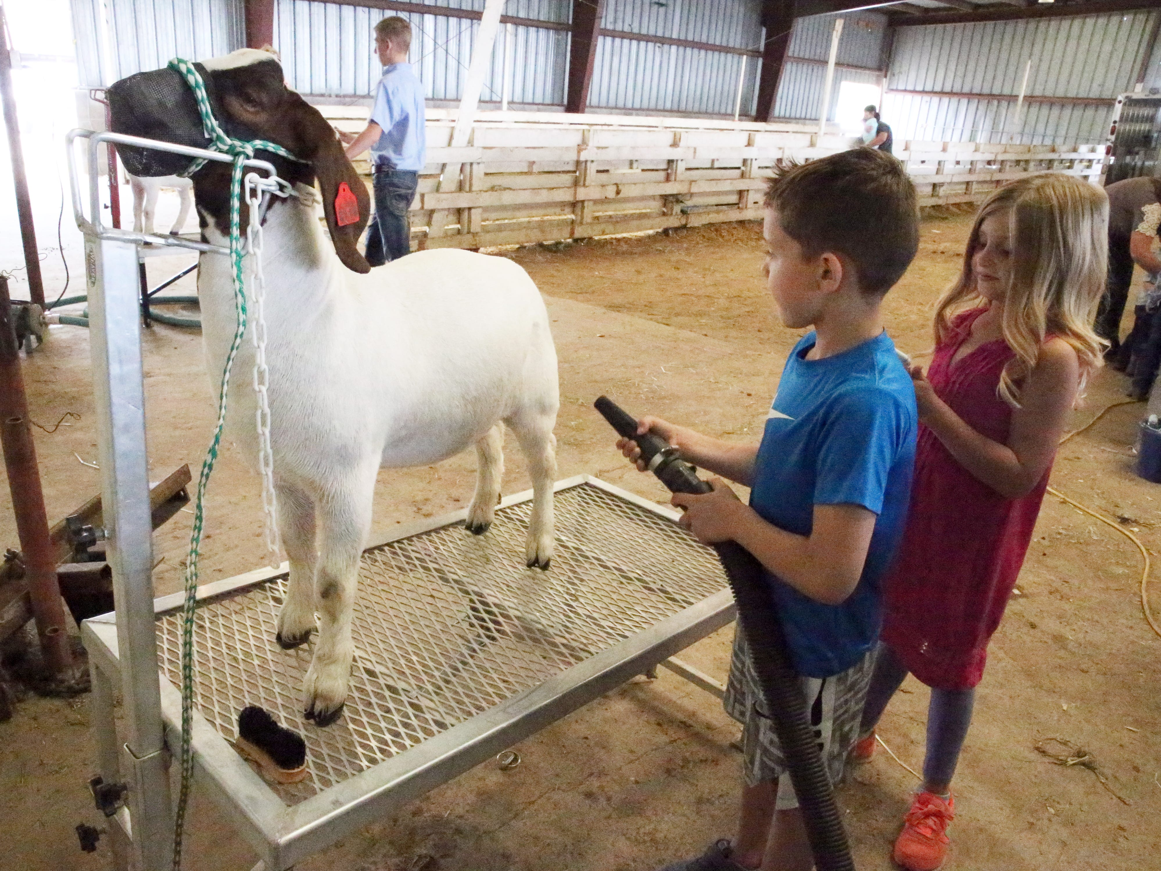 Jace Acevedo, 8, of Las Cruces dries a market goat for showing Saturday. At right is his sister, Kyler Tharp.