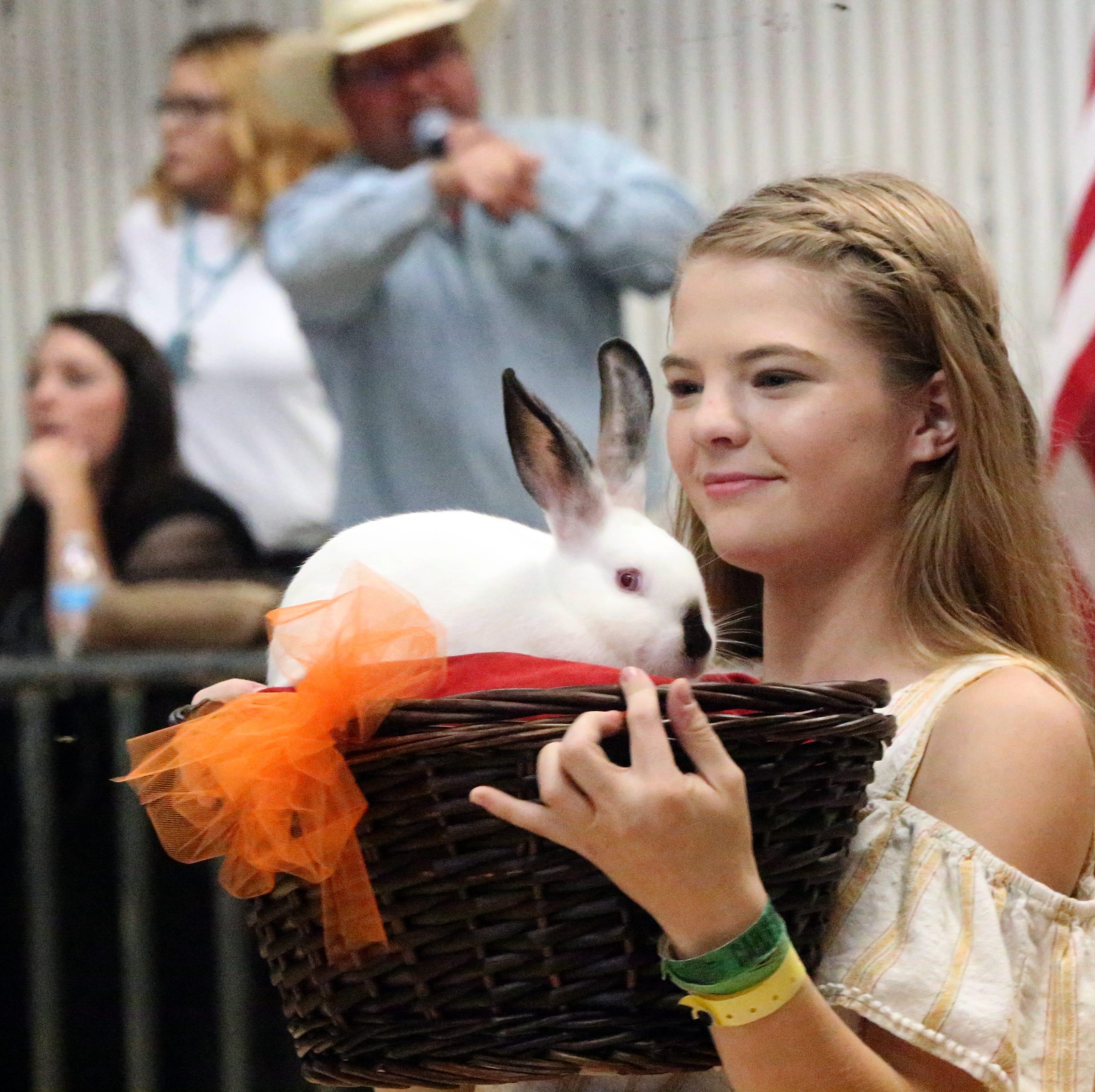 Scenes from the El Paso County Fair & Junior Livestock Show auction Saturday