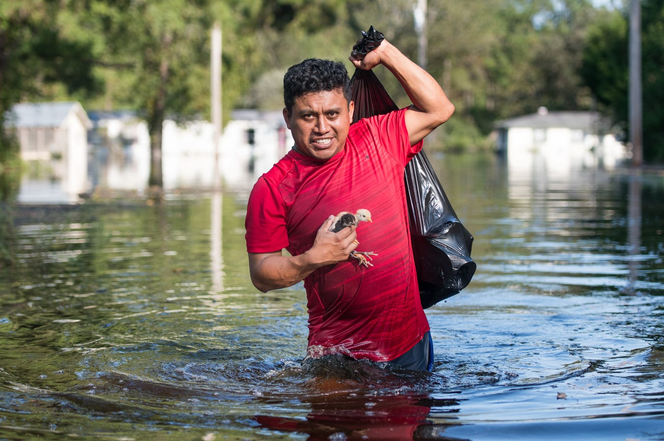 Luis Gomez rescues baby chicks from floodwaters caused by Hurricane Florence near the Todd Swamp, Friday, in Longs, South Carolina. Floodwaters are expected to rise in the area in through the weekend.