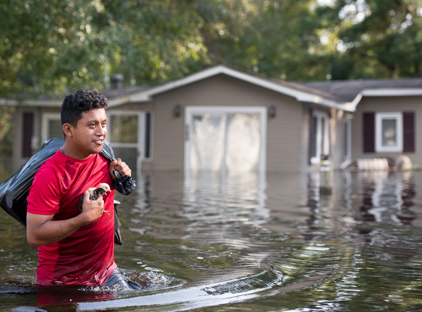 Luis Gomez rescues baby chicks from floodwaters caused by Hurricane Florence near the Todd Swamp in Longs, S.C..  Floodwaters are expected to rise in the area in through the weekend.
