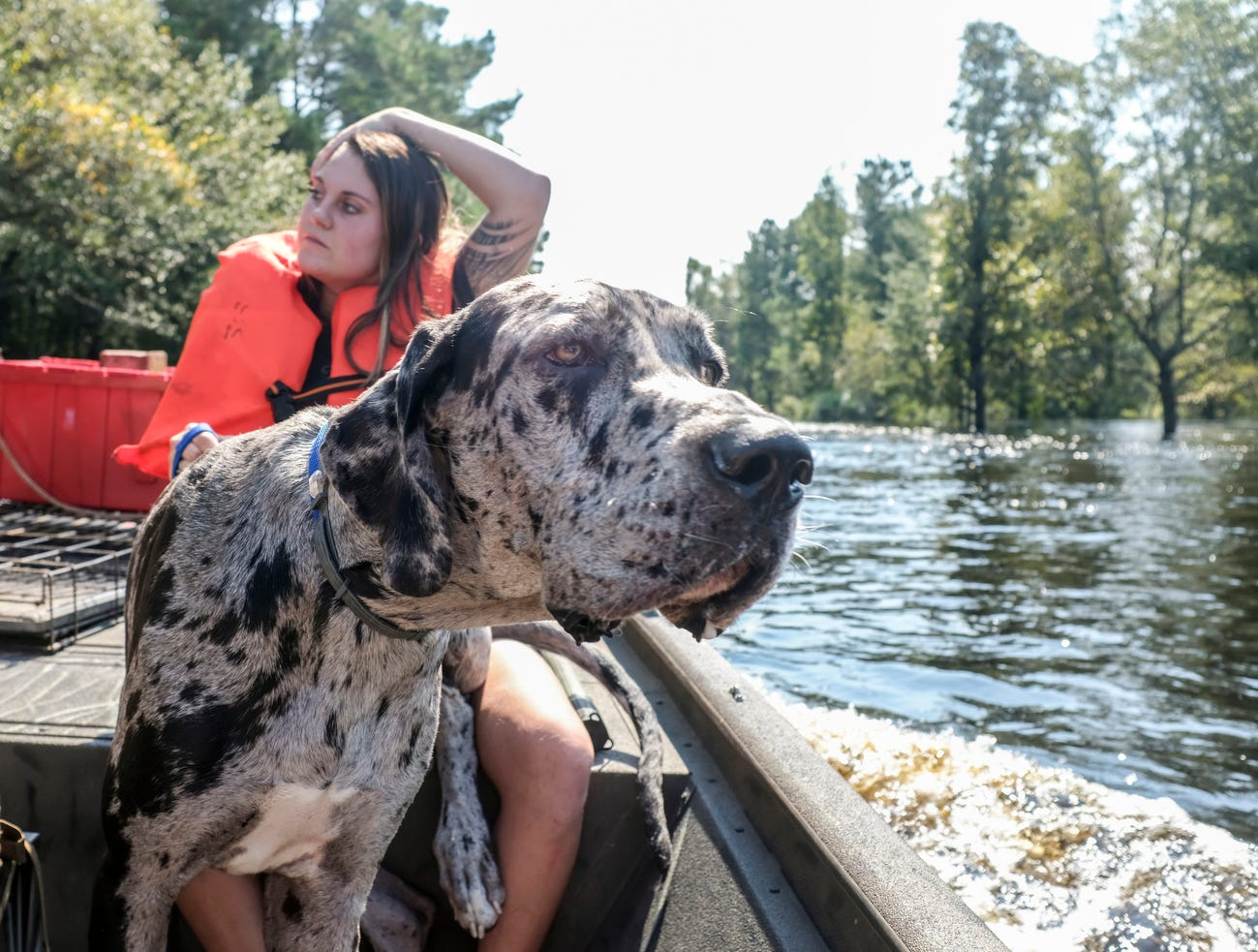 "Maria Milligan evacuates her dog ""Merl"" along with other animals including rabbits and chickens from her home on the Waccamaw River, Friday, in Conway, S.C."