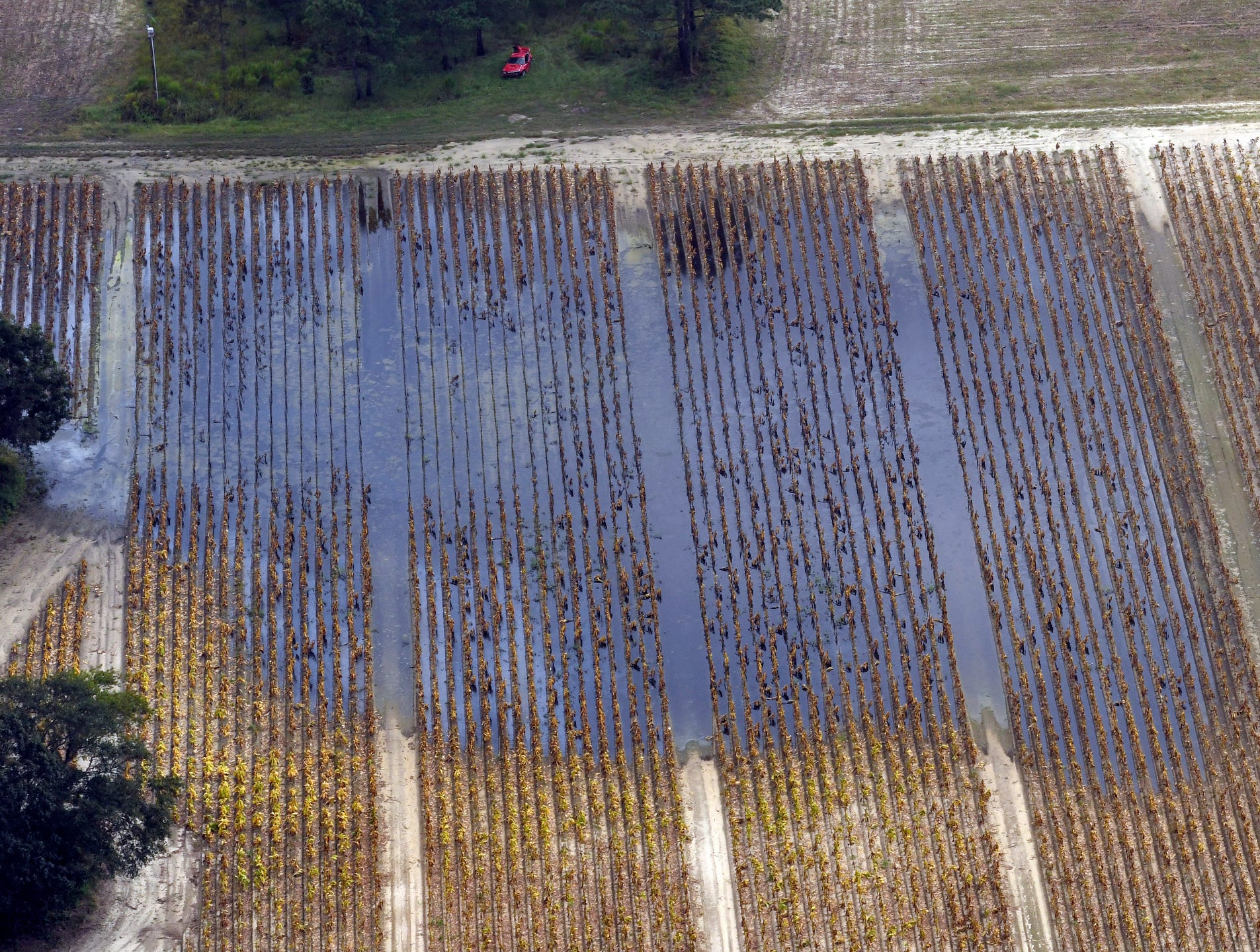 A portion of a tobacco field near Faison, N.C. flooded by water from Hurricane Florence is seen from a N.C. National Guard Blackhawk helicopter as Governor Roy Cooper tours agricultural areas of eastern N.C. hit hard by the storm.