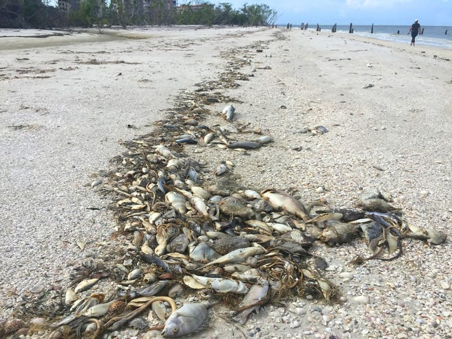 Algal blooms have choked off the wildlife of the Indian River Lagoon.