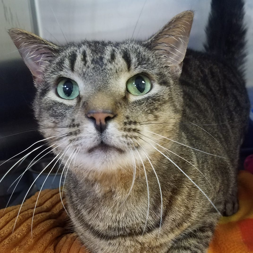 Ask the shelter: How good are cats' memories?
