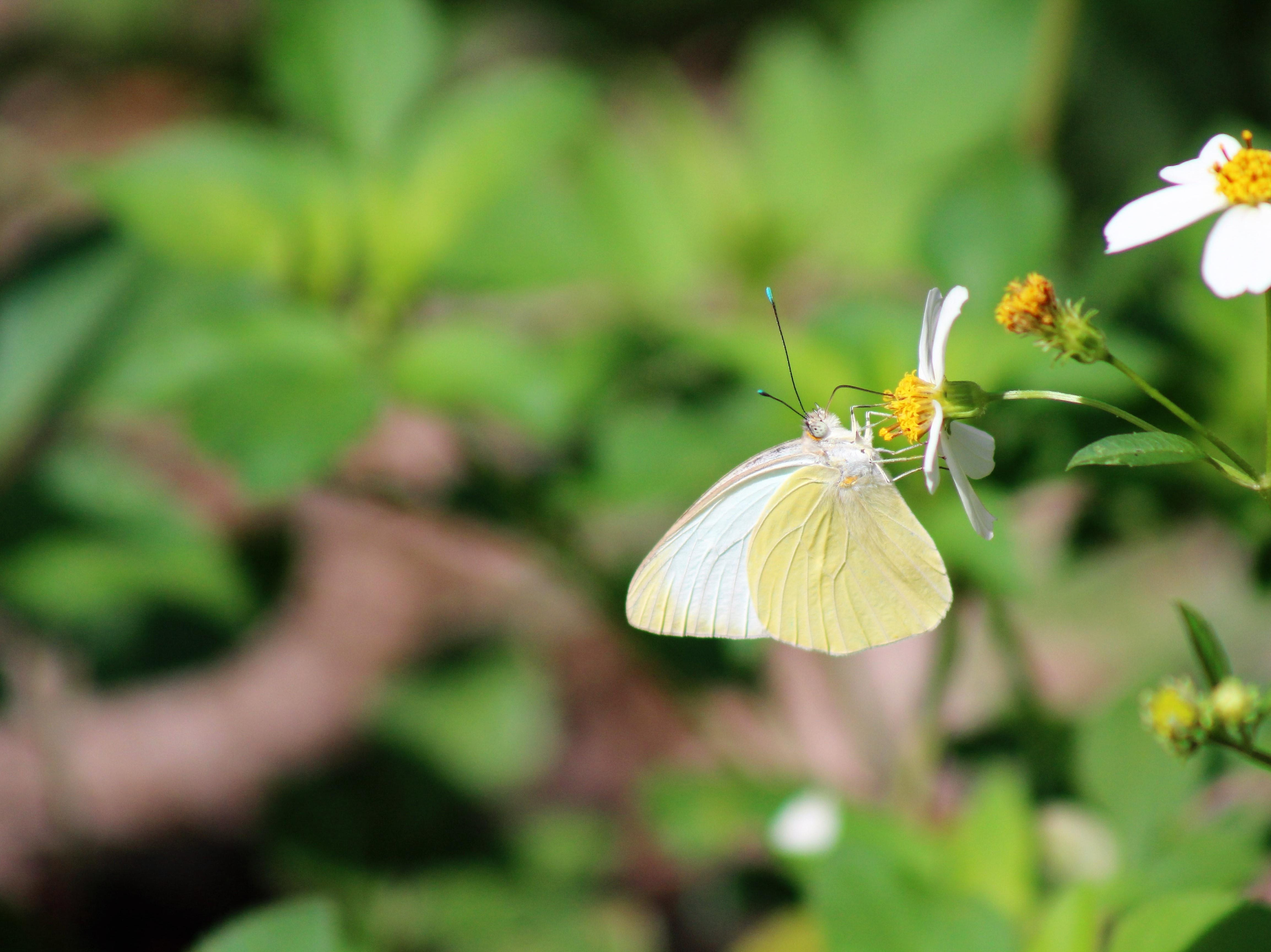 Butterflies are back in town and several different ones are visiting Tallahassee.