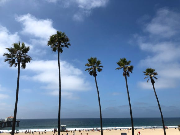 Photo of palm trees in Manhattan Beach on new and improved iPhone XS Max