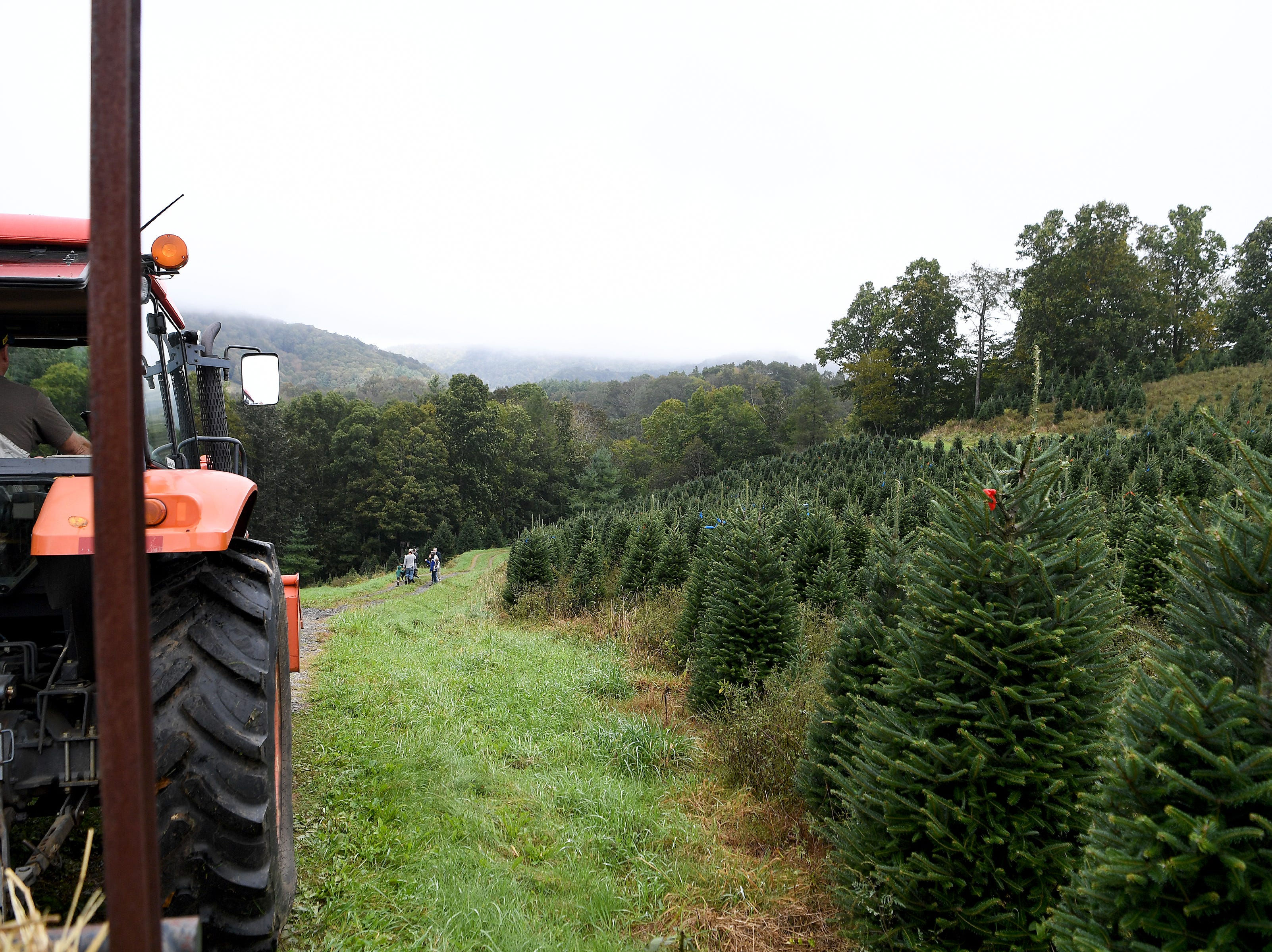 Members of the media are led through Mountain Top Fraser Fir, a Christmas tree farm in Newland, to watch White House officials pick out a tree for the Blue Room of the White House.