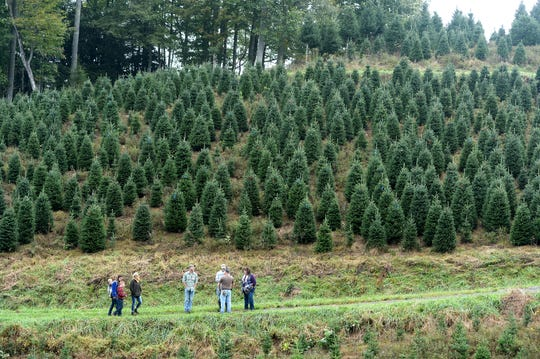 White House officials chose one of Mountain Top Fraser Fir Christmas tree farmer Larry Smith's trees to display in the Blue Room of the White House during an event at his Newland farm on Sept. 24, 2018.