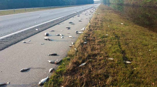 This Saturday photo provided by the North Carolina Department of Transportation shows fish left on Interstate 40 in Pender County in eastern North Carolina after floodwaters receded. Thousands of coastal residents remained on edge Sunday, told they may need to leave their homes because rivers are still rising more than a week after Hurricane Florence slammed into the Carolinas.