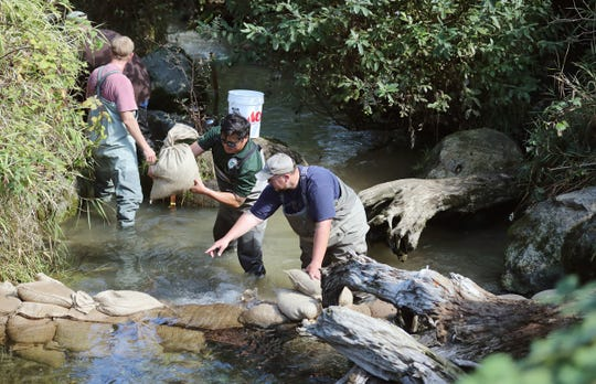 Department of Fish and Wildlife's Nam Siu (left) and Chris Waldbillig build a weir structure using sandbags in Gorst Creek on Monday. Sandbags were used to raise the water levels at a site salmon were having a hard time clearing.