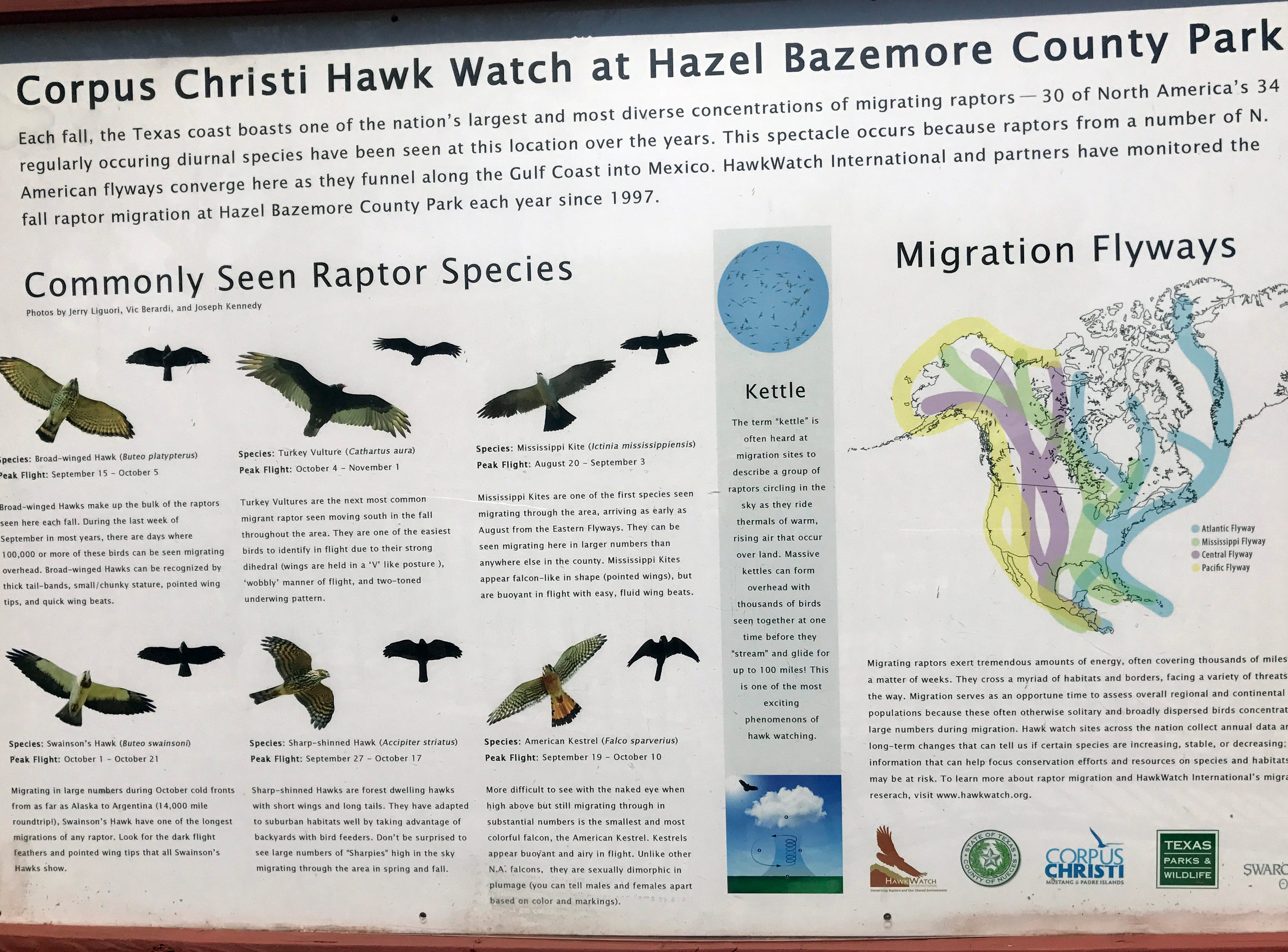 This interpretive sign at Hazel Bazemore Park provides insight into hawks and the hawk migration.