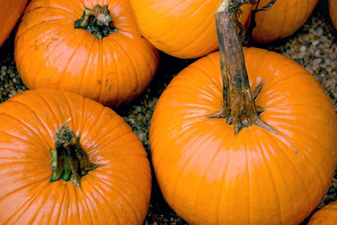 The annual Harvest Fest will transform the Bloomfield Hills campus of fleurdetroit into a seasonal celebration from 10 a.m. – 4 p.m. on Oct. 6.