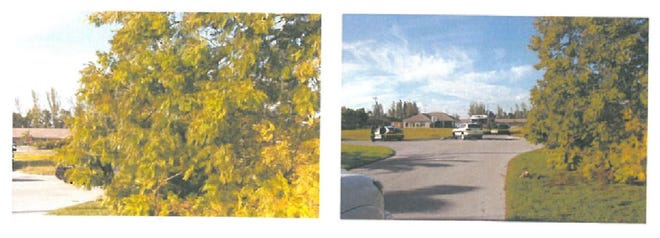 A screenshot of court documents shows photos of the fallen tree at SW 32nd Terrace and SW 8th Court in Cape Coral.